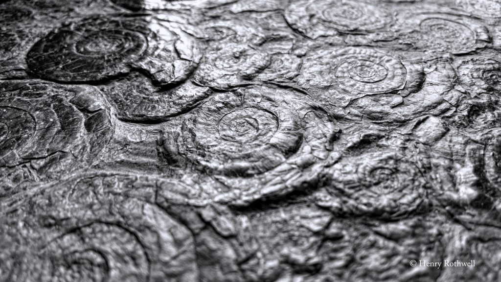 Un-ethereal-Ammonites