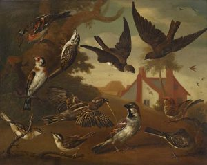 'British Birds: Brambling; Tree Creeper; Sand Martins; Goldfinch; a Pair of House Sparrows; a Pair of Sedge Warblers; and a Wagtail' Charles Collins, oil on canvas, 1736.